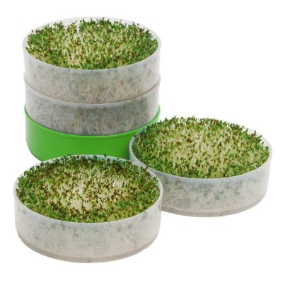 Sprouts For Chef Gift
